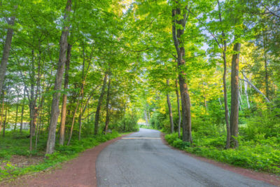 Door county road winding through sunlit trees