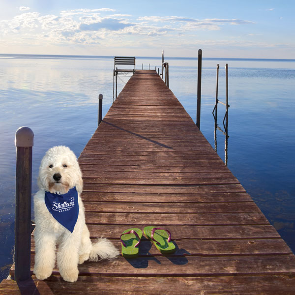 Adorable dog sitting on wooden pier stretching out into the bay