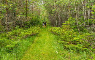 Couple walking on path though forest
